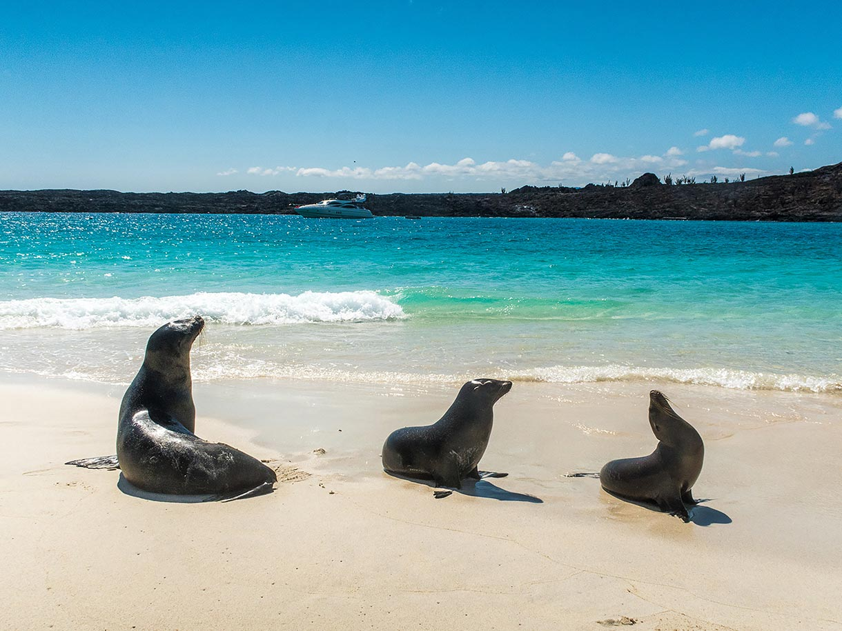 A comfortable way to explore Galapagos